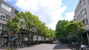 In een straatje met grotere bomen is het lekker toeven in de zomer